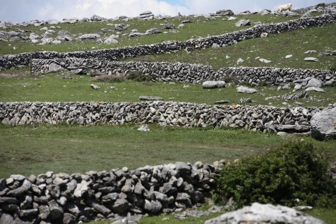 The Burren.  Stone fences.