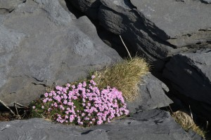 Inis Mor.  Spring in the Burren