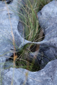 Inisheer.  The Burren limestone