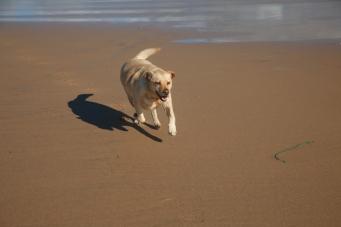 Doughmore Beach. Woof.