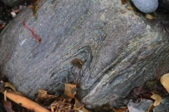 Folded schist