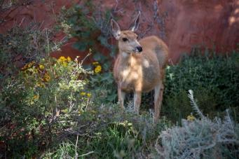 Deer roam the park