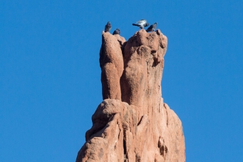 Hawks nest on the top of a rock