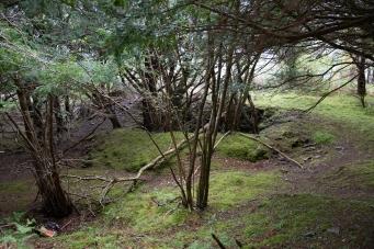 Shafts at Muckross Mine