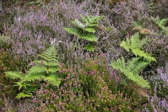 Heather and Bracken at the Avoca mine site.